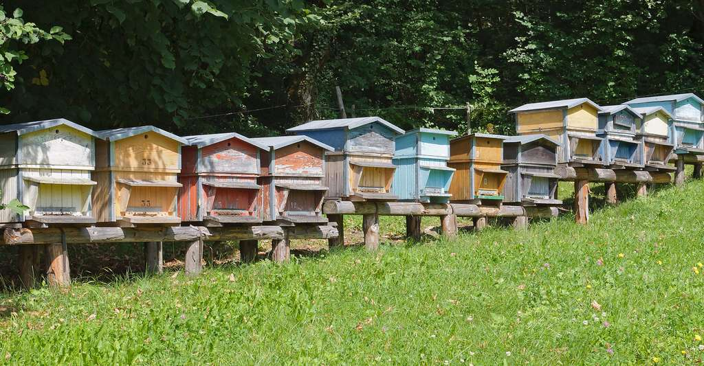 Pourquoi l'apiculture est-elle importante ? Ici, ruches dans les Pyrénées. © Myrabella, CC by-sa 3.0