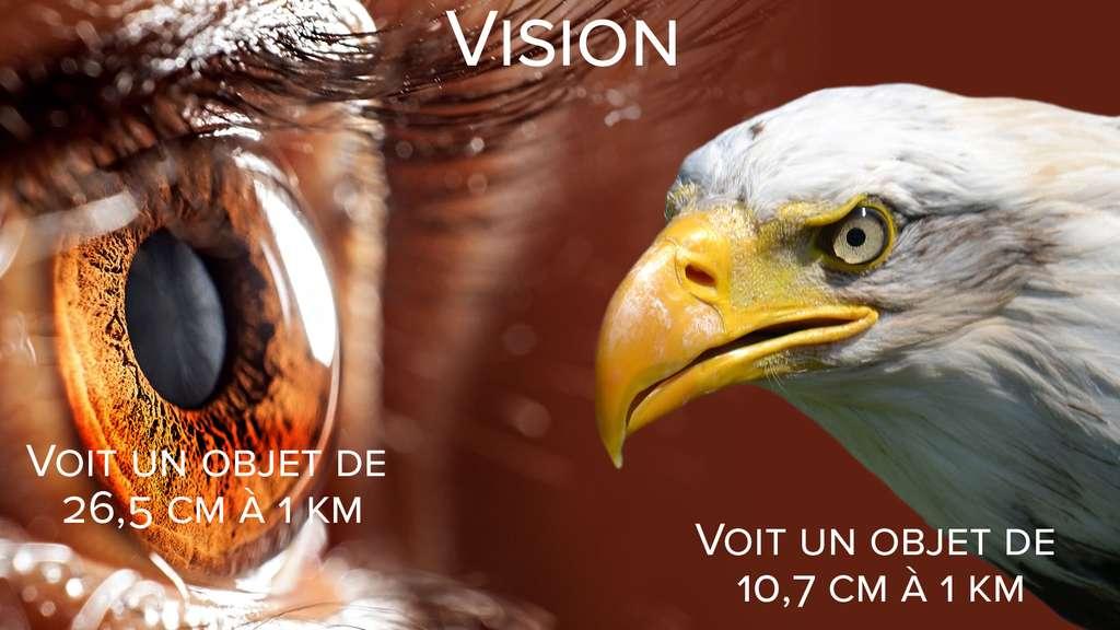 Vision : les rapaces nous dépassent !
