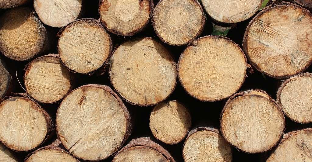 En exploitation forestière, le billon constitue un bois court, par opposition à la grume qui constitue un bois long. © Pexels, Pixabay, DP