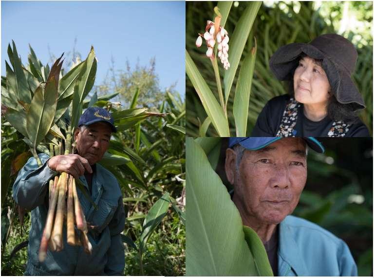 Après leur mission à Okinawa en 2018, l'entreprise Seqens Cosmetics a développé une filière de production locale d'Alpinia zerumbet. © Seqens Cosmetics