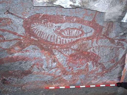 Figure 4 : camélidés de Cuchimachay (dép. de Lima). © M. Sepulveda, reproduction et utilisation interdites