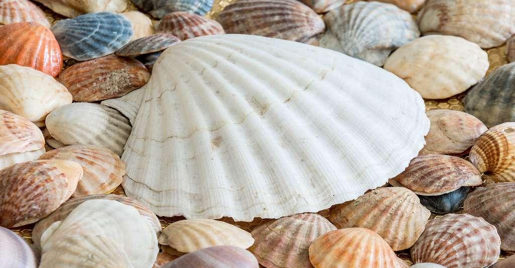 Pêle-mêle de coquilles. © Anestiev, Pixabay, DP