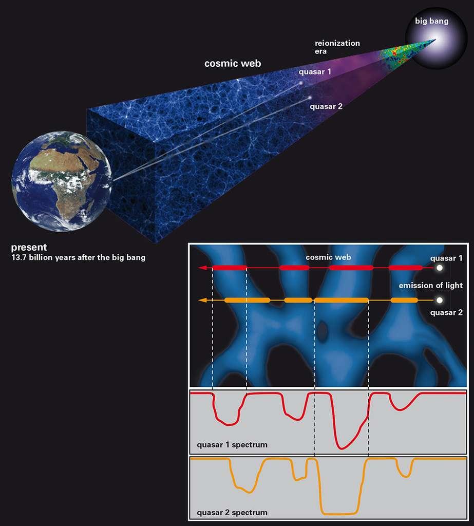 Des quasars avec des décalages spectraux et des positions sur la voûte céleste légèrement différentes voient leurs rayonnements absorbés par la distribution d'hydrogène intergalactique entre nous et eux. Les creux observés dans leurs spectres révèlent la présence de filaments dont les tailles sont de l'ordre de grandeur des grandes galaxies. © J. Oñorbe, MPIA