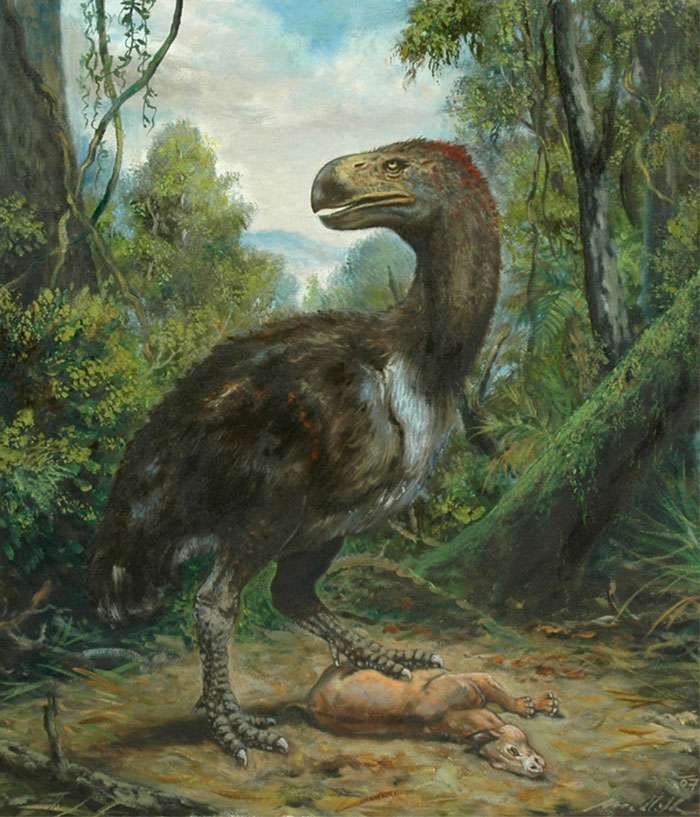 Reconstitution de Gastornis comme un grand prédateur se nourrissant de mammifères. © Petr Modlitba
