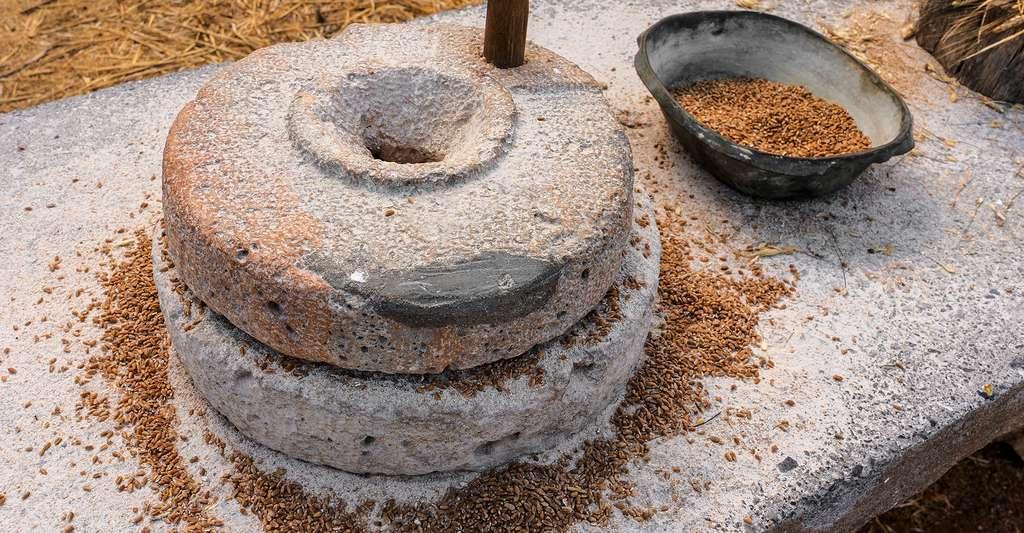 Meules fines à grain. © Gilmanshin, Shutterstock