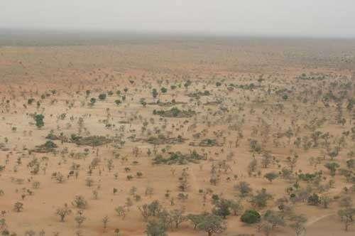 L'homme et son environnement: quelle place pour les forêts naturelles ? (Benimatu, Pays Dogon, Mali - 2004) © Photo Philippe Birnbaum - Tous droits de reproduction réservés