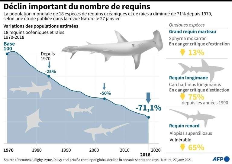 Déclin important du nombre de requins. © John Saeki, AFP