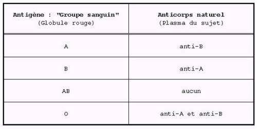 Tableau récapitulatif des différents antigènes de groupe sanguin et des anticorps associés. On remarque que les anticorps anti-A et anti-B sont associés à l'antigène O. © DR