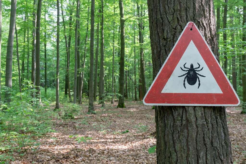 En France, on enregistre environ 84 cas de maladie de Lyme pour 100.000 habitants, principalement dans l'est et le centre. © gabort, Fotolia