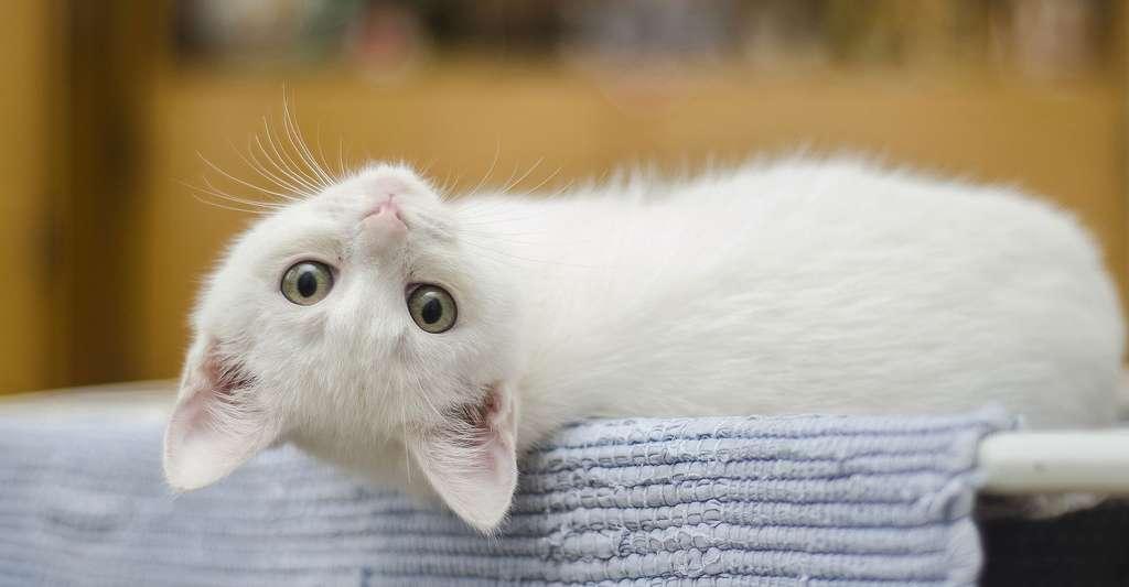 Le chat, notre ami. © Pexels, Pixabay, DP