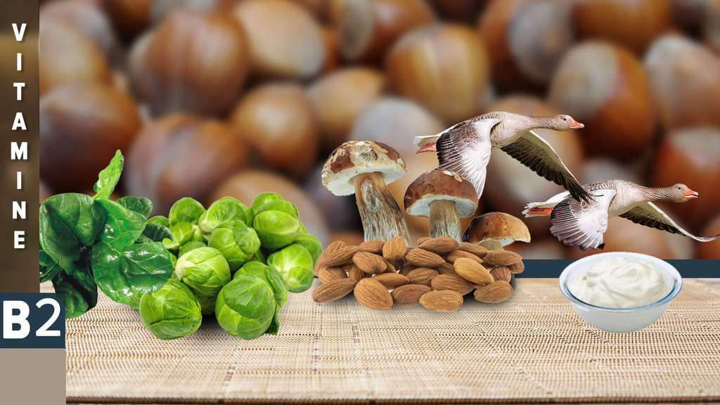La vitamine B2, importante pour le métabolisme
