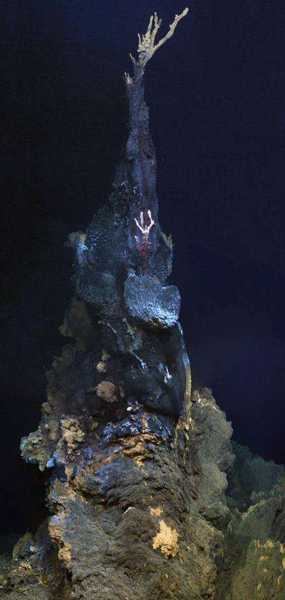La cheminée baptisée Jabberwocky mesure 6 m de hauteur. C'est un fumeur noir dont les eaux sont très chargées en minéraux et dont les fluides sont très chauds. Dix espèces ont été observées aux alentours. © Jon Copley et al.