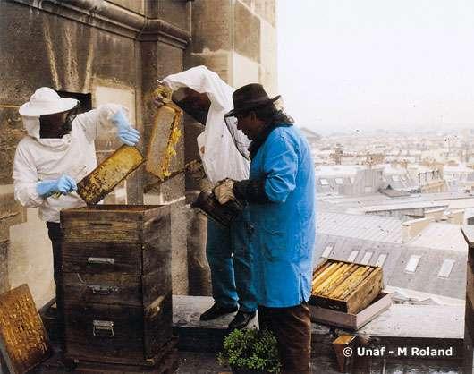 Rucher du toit de l'opéra Bastille, à Paris. © Reproduction et utilisation interdites