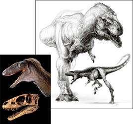 Raptorex kriegsteini à côté de Tyrannosaurus rex : un air de famille évident. Le crâne, en photographie, montre en particulier des similitudes remarquables, avec une mâchoire puissante, des dents acérées et des bulbes olfactifs conséquents. (Cliquer sur l'image pour l'agrandir.) © Todd Marshall (dessin), Mike Hettwer (photo)