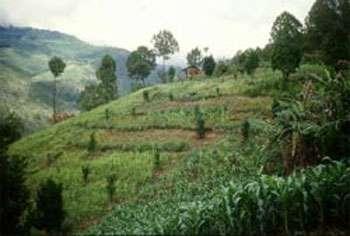 Lutte contre l'érosion grâce à la plantation de rangs d'herbes sur des versants pentus, en Inde. © FAO, G. Blaak