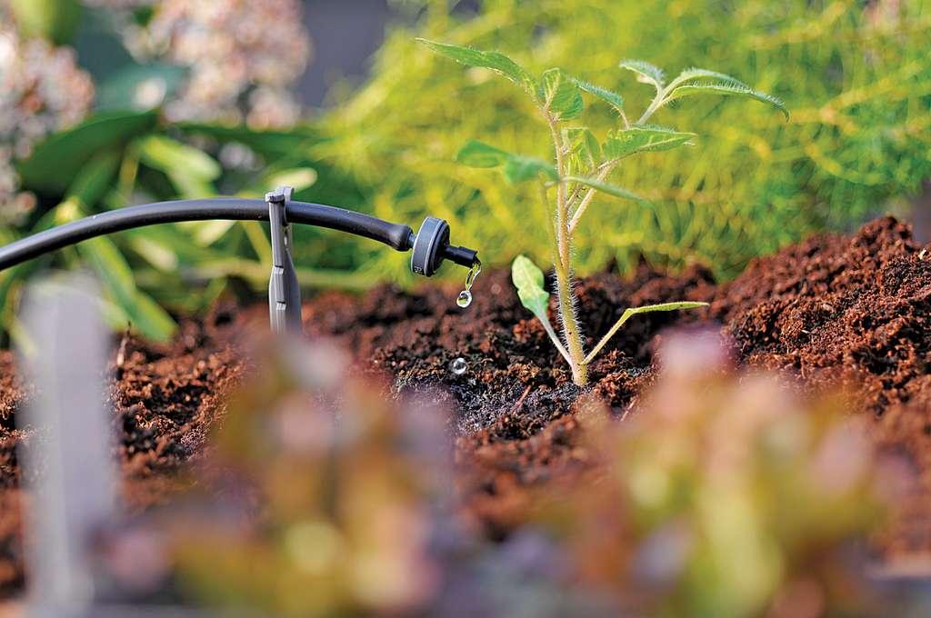 Distribuée régulièrement au pied des végétaux en goutte-à-goutte, l'eau nourrit directement les racines des végétaux et forme un bulbe humide dans la terre. Résultat, moins de maladies et des économies d'eau. ©Hozelock