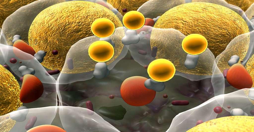 La thrombose peut être causée par la rupture des plaques d'athérome. © Ugreen 3S - Shutterstock