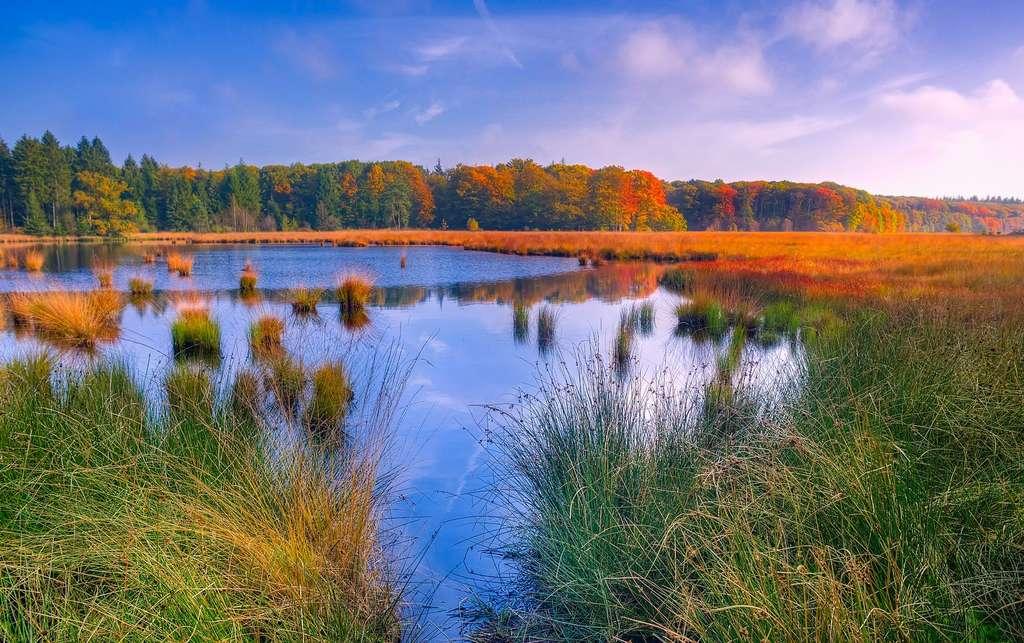 Les marais sont émetteurs de méthane. © 12019, Pixabay, DP