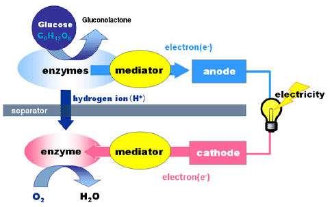 Schéma de fonctionnement de la biobatterie de Sony. La production d'énergie est générée par la décomposition des molécules de sucre. © Sony