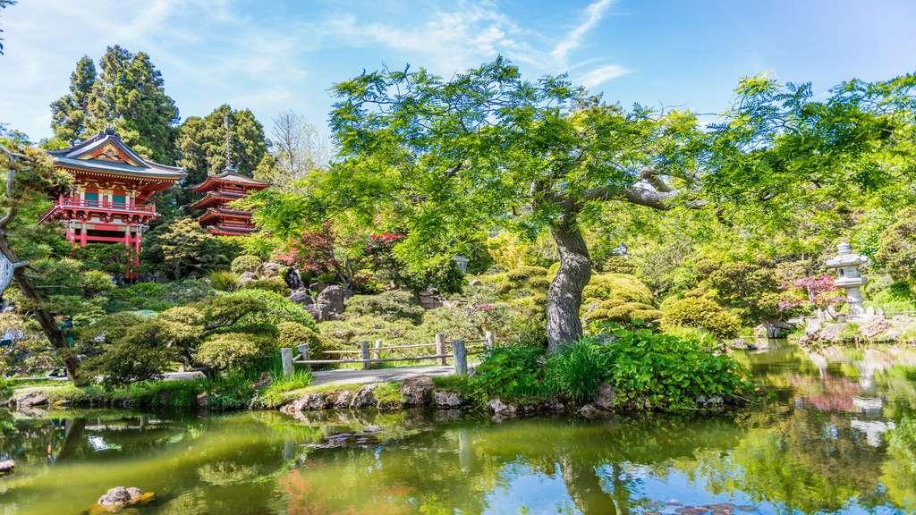 Le jardin japonais : prendre le thé à San Francisco