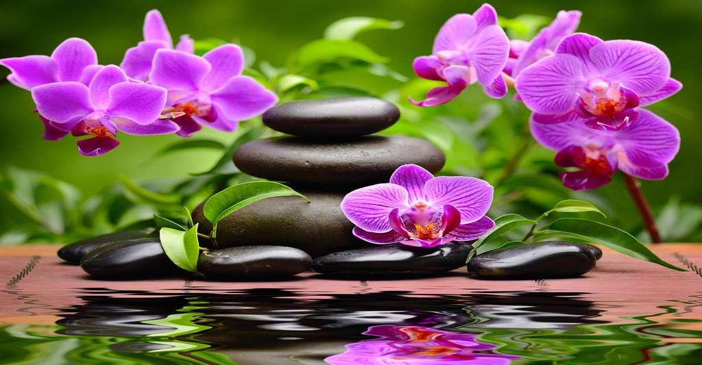 Quel lien entre les fleurs et les émotions humaines ? Ici, des orchidées. © Shutterstock