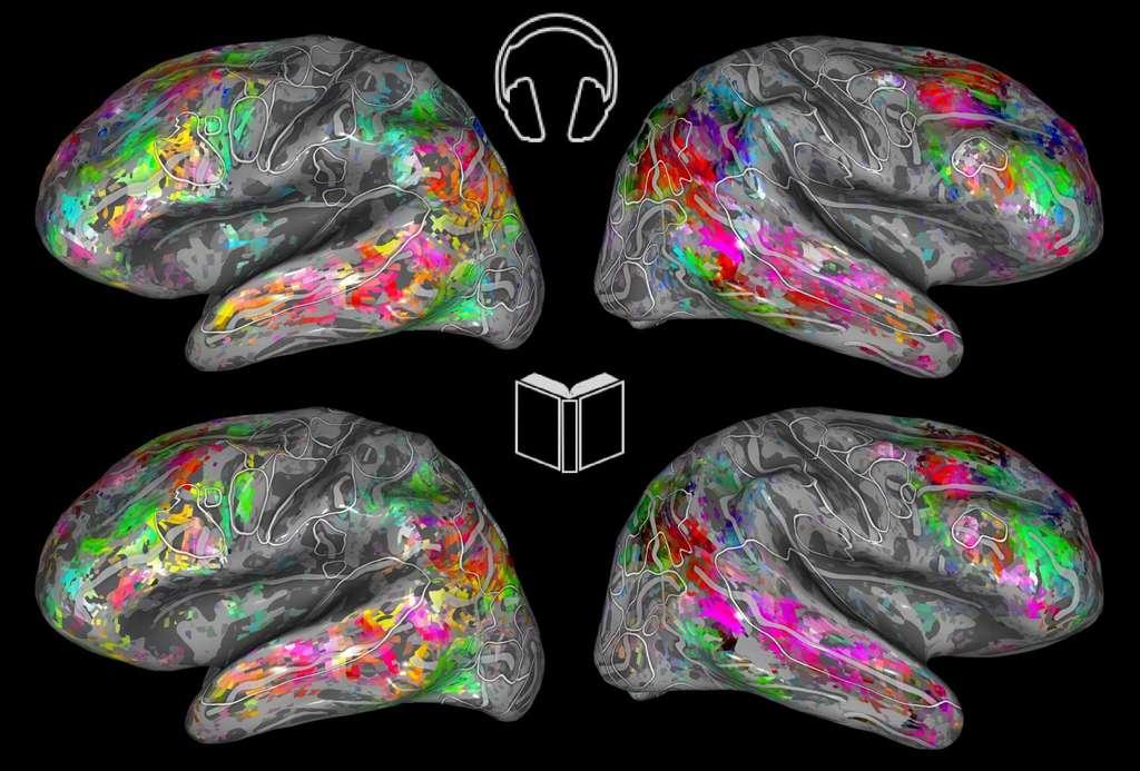 Les cartes cérébrales codées par couleur montrent les similitudes sémantiques lors de l'écoute (en haut) et de la lecture (en bas). © Fatma Deniz