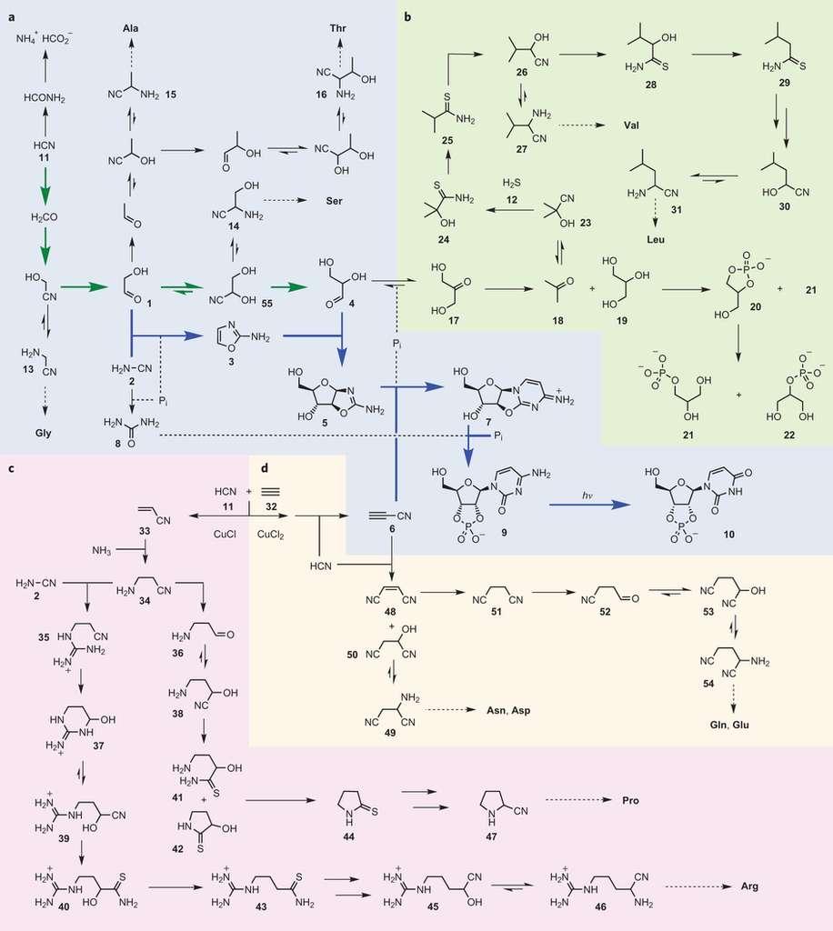 Une remarquable série de réactions conduit conjointement à la formation de plusieurs molécules, à la base des constituants cellulaires, à partir du cyanure d'hydrogène et du sulfure d'hydrogène. Des réactions similaires, mais plus complexes, ont peut-être mené à l'émergence des cellules vivantes sur la Terre de l'Hadéen il y a plus de 4 milliards d'années. © Nature Chemistry