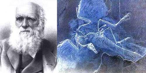 Charles Darwin et L'Archéoptéryx ce fossile mystérieux mi-dinosaure mi-oiseau