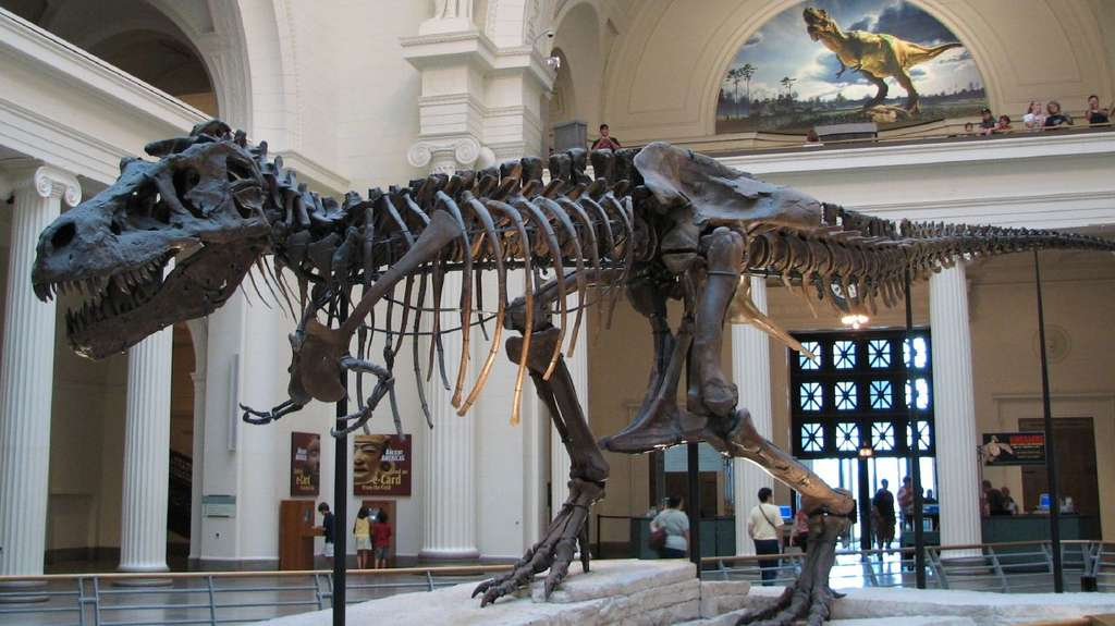 Sue, le T-rex du musée de Chicago, l'un des plus grands carnassiers de tous les temps. © Steve Richmond, Wikimedia Commons, cc by 2.0