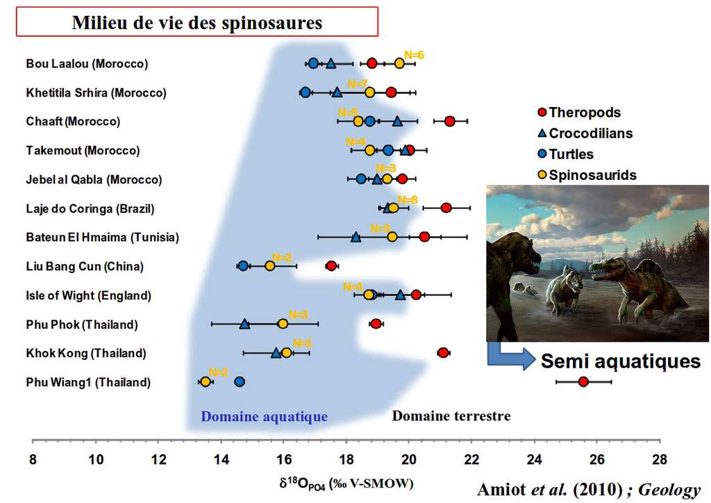 Les isotopes stables de l'oxygène montrent que les spinosaures passaient le plus clair de leur temps dans l'eau. © Marc Simonetti et Romain Amiot, DR
