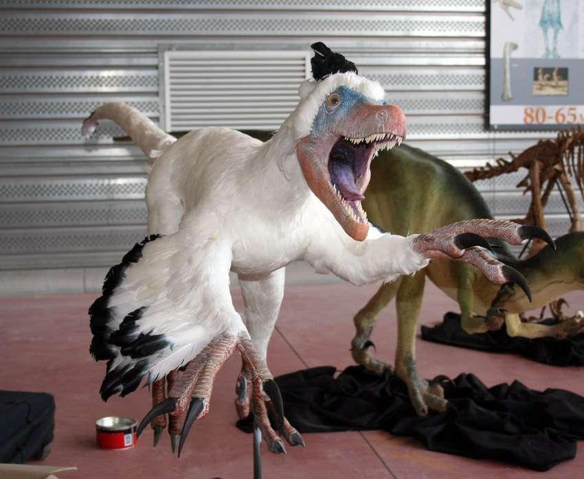 Le variraptor enfin terminé, aussi vrai que nature ! © Michel Fontaine