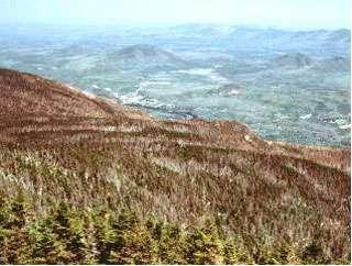 Figure 11 : Forêt boréale endommagée par les pluies acides © : US Forest Service