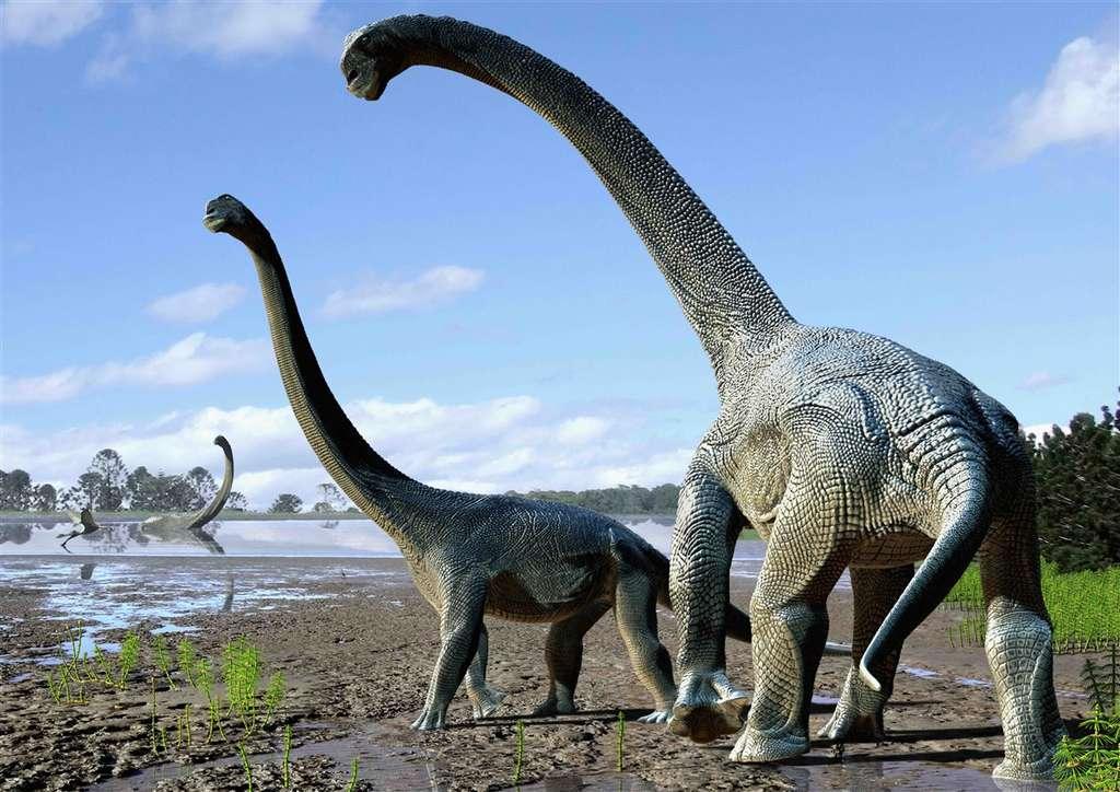 Une représentation d'artiste de Savannasaurus elliottorum, qui vivait il y a 98 millions d'années. Ces animaux pouvaient probablement peser de 15 à 20 tonnes. © Australian Age of Dinosaurs, 2016, tous droits réservés