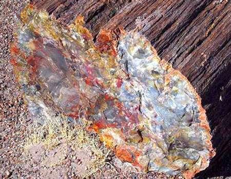 Un des troncs pétrifiés du Petrified Forest National Park en Arizona,États-Unis. © Jon Sullivan