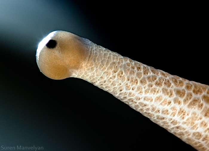 Le mauvais œil de l'escargot
