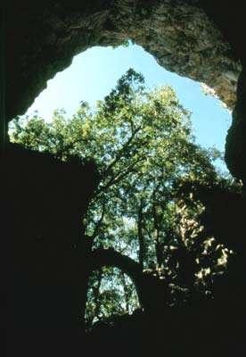 Au pied d'une falaise, noyée dans les feuillages, s'ouvre la grotte préhistorique du Rouzet © Photo Dominique Felga