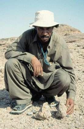 Éléments du palais d'un mastodonte (cousin éteint des éléphants doté de quatre défenses) découverts par Mouloud Benammi dans des dépôts âgés d'environ 18 millions d'années. © 1999 MPFB (POA)