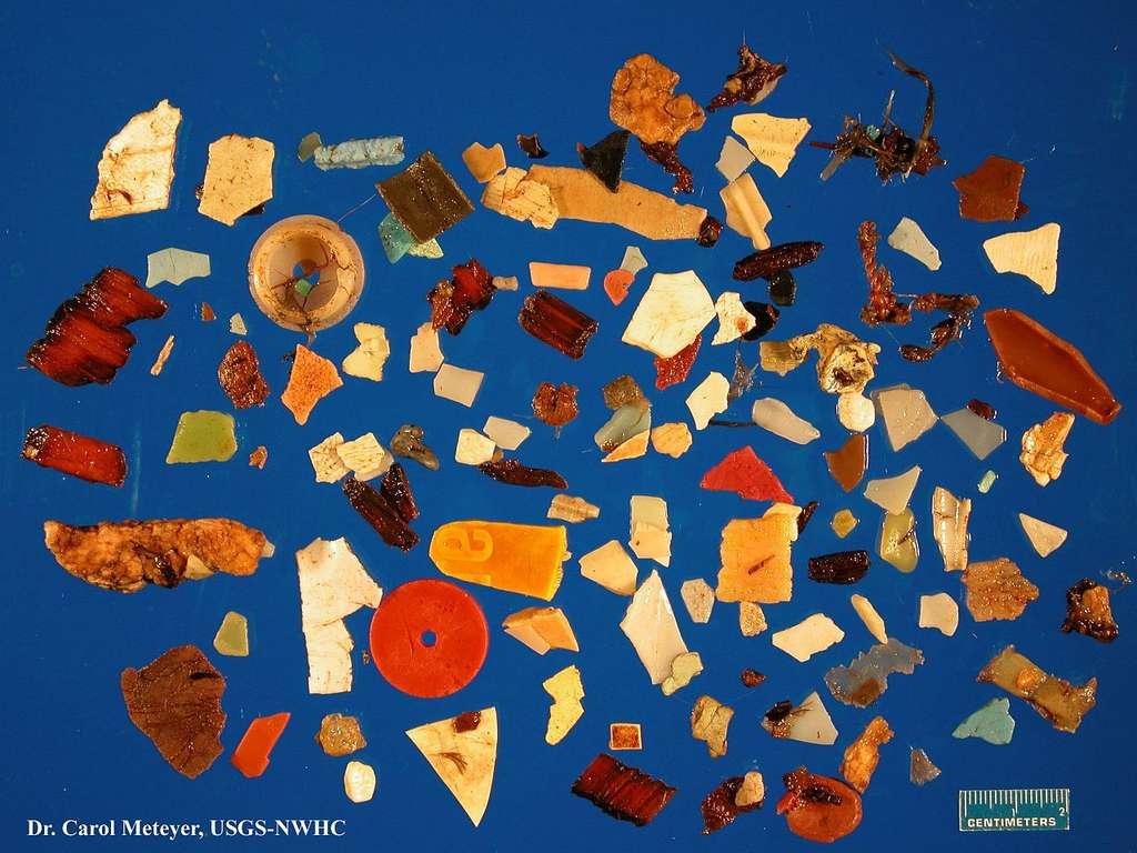 Ensemble des morceaux de plastique retirés de l'estomac d'un seul fulmar nord, un oiseau de mer, au cours d'une autopsie au Laboratoire national de la faune. © Carol Meteyer, USGS, CC by-nc 2.0