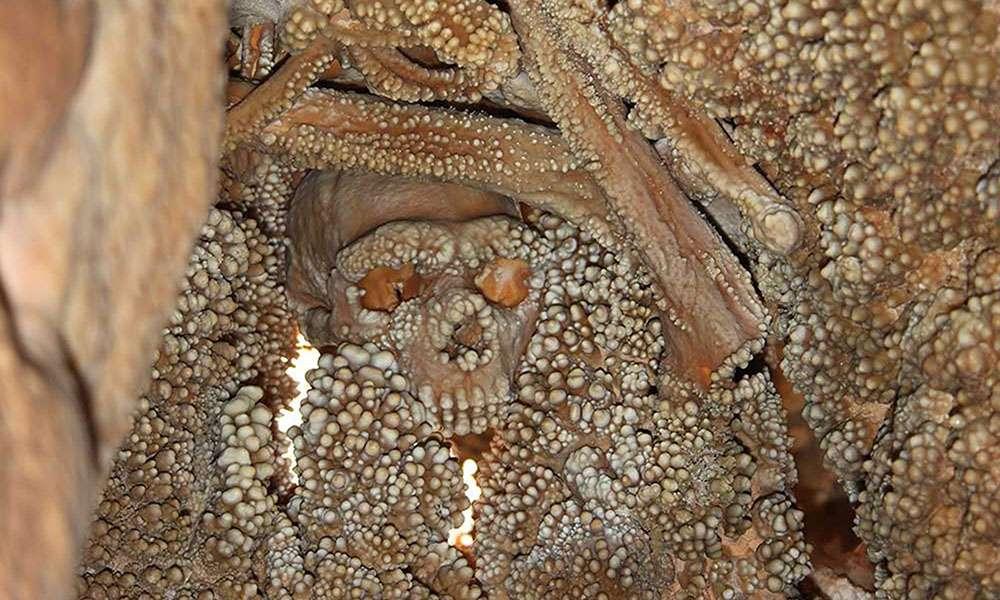 Squelette de l'homme d'Altamura. © Antoine, tous droits réservés