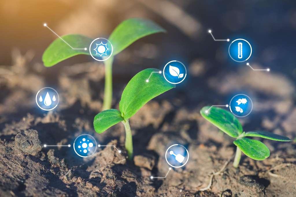 Les plantes peuvent être soumises à des stress biotiques (provenant d'un organisme vivant) ou abiotiques (provenant d'un changement de l'environnement). Il semble que lorsque les deux surviennent simultanément, elles soient incapables de les gérer. © Worawut, Adobe Stock