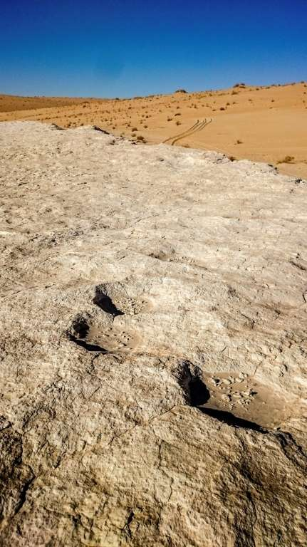 Des traces d'éléphants à la surface d'un ancien lac baptisé Alathar, en Arabie saoudite. © Paul Breeze, AFP, Archives