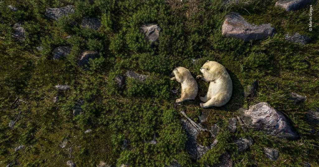 Comme une envie de prendre part à cette douce « Sieste estivale ». © Martin Gregus, Wildlife Photographer of the Year