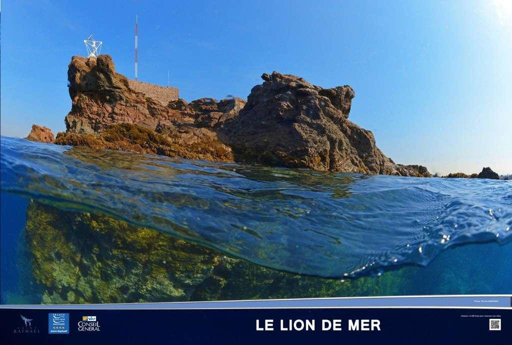 Le Lion de mer