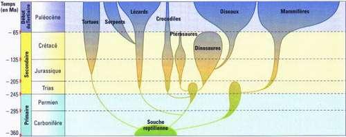 Évolution des Amniotes depuis 360 millions d'années. © Éditions Belin