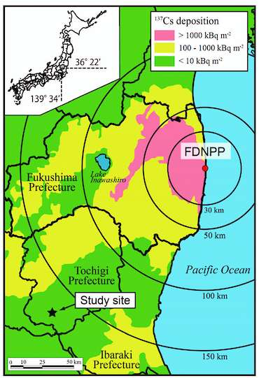 Carte présentant les retombées cumulées de césium 137 (137CS deposition) mesurées (en Bq/m²) autour de la centrale de Fukushima-Daiichi (FDNPP) entre mars et août 2011. Hiroaki Kato a réalisé ses mesures au sein de plantations situées au niveau de l'étoile noire (Study site). © Kato et al., 2012, Geophysical Research Letters