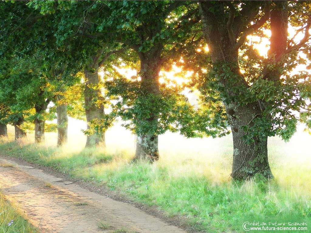 Route ombragée
