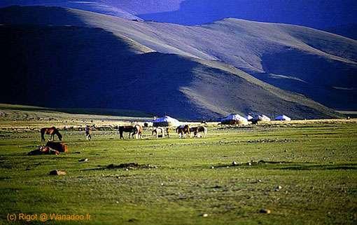 Plaine de Mongolie. © Rigot