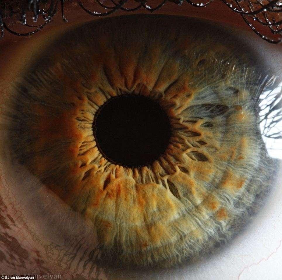 La pupille (l'orifice central) se dilate plus ou moins en fonction de la lumière. Une vive émotion peut aussi provoquer sa dilatation. © Suren Manvelyan