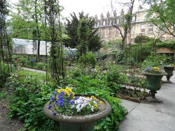 Balade au cœur du jardin de plantes médicinales à la Faculté de pharmacie. © Courtesy de la Faculté de pharmacie de Paris