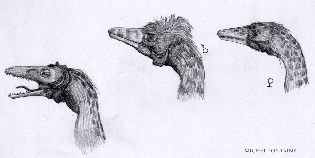 Compsognathus ébauche tête